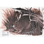"Maple Leaf Authentic Animal Faces, 12""x18"", Rabbit"