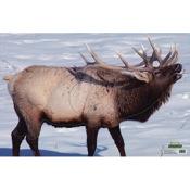 Martin Paper Targets Elk