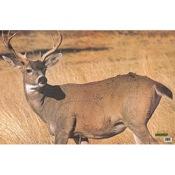 Martin Paper Targets Field Buck