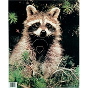 Martin Paper Targets Raccoon