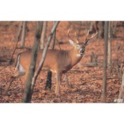Delta McKenzie Tru-Life Eastern Series Large Game - Deer Sneak