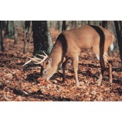 Delta McKenzie Tru-Life Eastern Series Large Game - Deer Finding