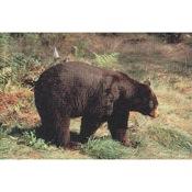 Delta McKenzie Tru-Life Eastern Series Large Game - Bear
