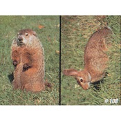 Delta McKenzie Tru-Life Eastern Series Small Game - Woodchuck/Rabbit