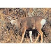 Delta McKenzie Tru-Life Western Series Large Game - Mule Deer