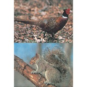 Delta McKenzie Tru-Life Western Series Small Game - Pheasant/Squirrel