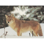 Delta McKenzie Tru-Life Eastern Series Small Game - Coyote