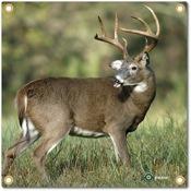 """Arrowmat Foam Rubber Target Face - Big Buck, 17""""x17"""""""