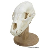 Walnut Hollow Skull Mounting Kit, Solid Oak