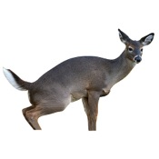 "Montana Estrus Betty Doe Decoy, 43""x56"""