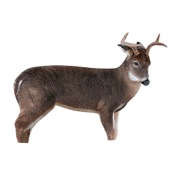 "Montana The Freshman Deer Decoy, 37""x48"""